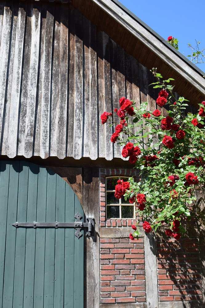 Fachwerkhaus mit Rosen